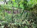 Nutrition garden developed in Jhabua for sustainable nutrition and resistance from fluorosis among villagers.